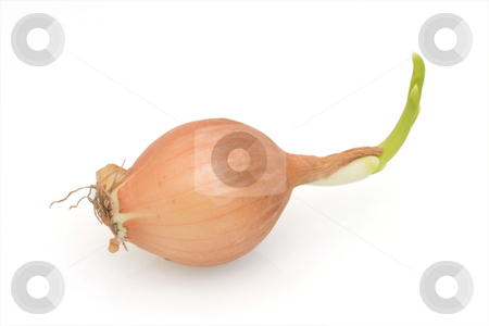 Onion on White stock photo, Onion against a white background by Inge Schepers
