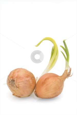 Onions on White stock photo, Two onions against a white background by Inge Schepers