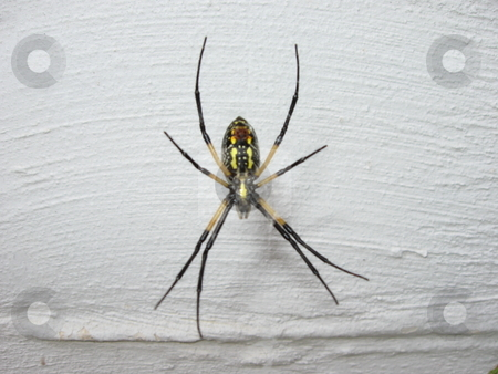 Spider  stock photo, Spider sitting on a web by Jeffrey Sharpe