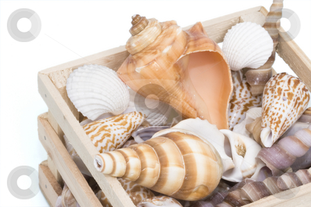 Variety of seashells stock photo, Variety of tropical seashells in a small wooden crate by Inge Schepers