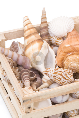 Variety of tropical seashells stock photo, Variety of tropical seashells in s small wooden crate by Inge Schepers