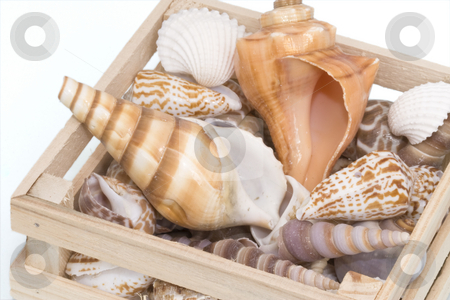 Variety of tropical seashells stock photo, Variety of tropical seashells in a small wooden crate by Inge Schepers