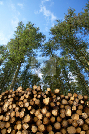 Stack of freshly cut trees in a forest. stock photo, Stack of freshly cut trees in a forest. by Stephen Rees