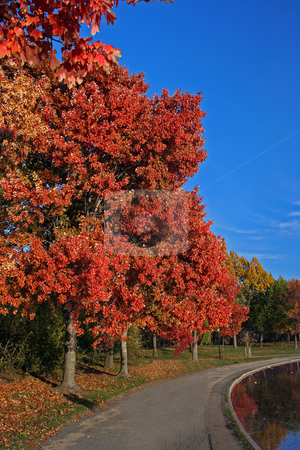 Fall scenery stock photo, Beautiful tree with red leaves as a fall scenery with a path next to it under a deep blue sky by Paul Hakimata