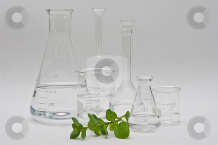 Pure chemistry stock photo, Clean and clear chemistry for cosmetic beauty products; clear liquids in a variety of bottles and flasks on a white background and a plant in the front by Paul Hakimata