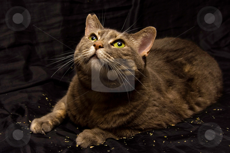 Curious cat stock photo, Cat's curiosity, as usual. What is that? by Paul Hakimata