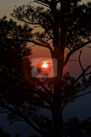 Sunset behind tree stock photo, A beautiful red with yellow sunset behind a pine tree showing its Silhouette by Paul Hakimata