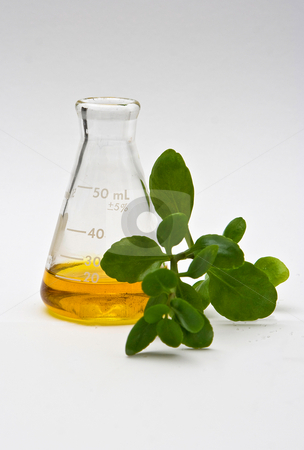 Natural chemistry stock photo, A yellow liquid in a flask with some leaves in the front on a white background by Paul Hakimata