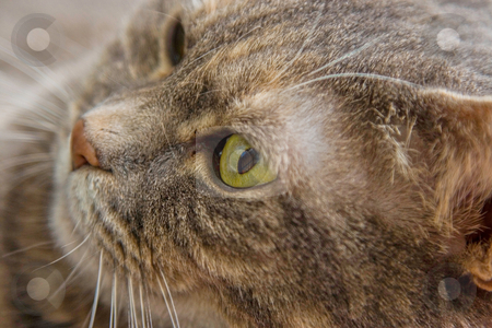Cat's eye stock photo, Portrait of a cat's eye. by Paul Hakimata