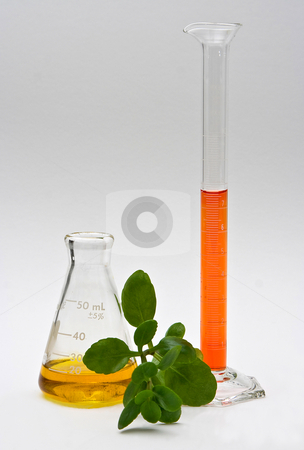 Natural chemistry stock photo, A yellow liquid in a flask and orange liquid in a cylinder with some leaves in the front on a white background by Paul Hakimata