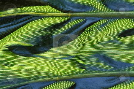 Leaf Closeup stock photo, Closeup of a large plant leaf shows a unique pattern and texture by Joseph Ligori
