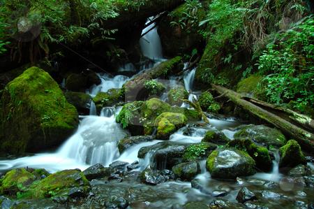 Heavens Garden stock photo, Waterfall in a jungle by Nilanjan Bhattacharya