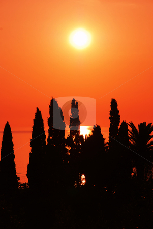 Orange sunset stock photo, Orange sunset over sea behind black tree silhouettes by Julija Sapic
