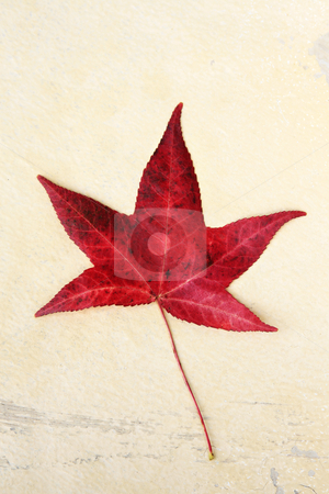 Red Leaf stock photo, Beautiful red autumn leaf by Anita Peppers