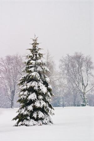Winter Wonderland Scene stock photo, Snowy winter landsape in the cold white north by Johan Knelsen