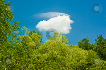 Blue Sky with Clouds stock photo, Blue sky background with white clouds and a tree by Johan Knelsen