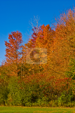 Fall In Canada stock photo, Beautiful cloudless fall day with vibrant colors by Johan Knelsen