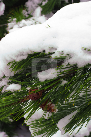 Winter Wonderland Scene stock photo, Snowy winter landsape in the cold white north by Johan Knelsen
