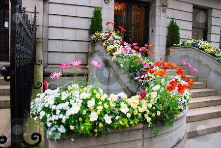 Entrance door and flowers stock photo, Front stairs of old stone building surrounded by flowers by Julija Sapic