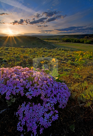 Last Light of Spring stock photo, The sun setting on the hirzon above Snow Mountain Ranch in the Yakima Valley with Snowy Phlox and balsamroot covering the landscape in color. by Mike Dawson