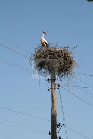 Big white stork on the nest. stock photo, Big white stork on the nest which standing on the wood column with wiring against a blue sky background. by Viachaslau Barysevich