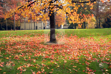 Autumn tree stock photo, Autumn tree with fallen leaves on the grass by Kheng Guan Toh