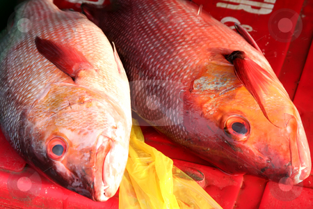 Fish market stock photo, Whole fresh raw fish presented for sale in market by Kheng Guan Toh