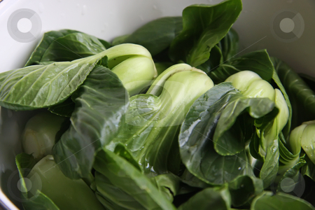Green vegetables stock photo, Green leafy raw chinese vegetables baby bakchoy by Kheng Guan Toh