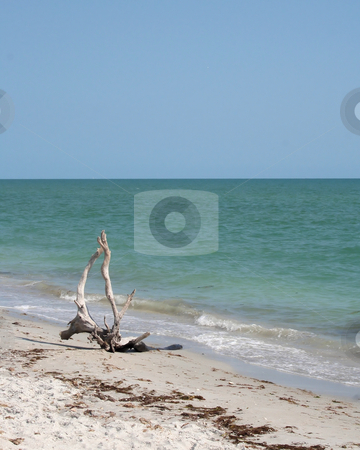 Driftwood on the Beach stock photo,  by Rosi Berry