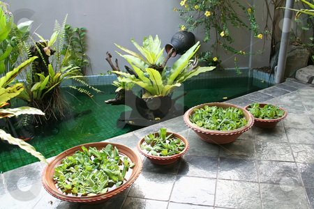 Balinese decor plants stock photo, Pot with floating plants in Balinese architectural style by Kheng Guan Toh