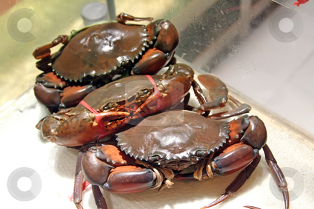 Live crabs stock photo, Live bound crabs ready for cooking selection by Kheng Guan Toh