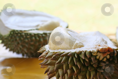Durian fruit stock photo, Fresh open durian fruit fresh tropical exotic by Kheng Guan Toh