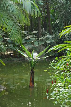 Tropical landscape stock photo, Tropical landscape scenery aquatic plants and pond by Kheng Guan Toh
