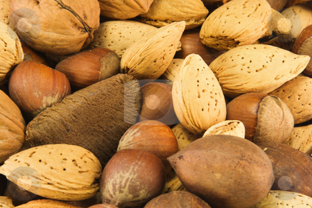 Nut variety background stock photo, A variety of nuts, almonds, hazel, pecan, walnut, and brazil by Lee Barnwell