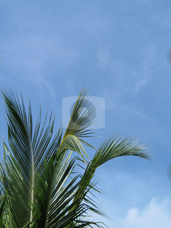 Palm tree stock photo,  by Mbudley Mbudley