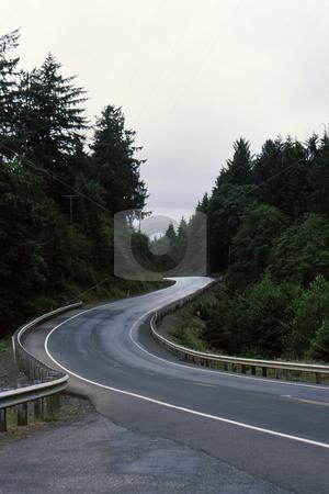 Curves through the trees stock photo, Winding road through the pine trees with undulating curves by Joseph Ligori