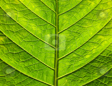 Leaf close up stock photo, Close up of green leaf. by Sinisa Botas