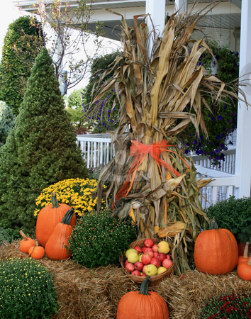 The Fall Harvest stock photo, Front porch decorated for the fall harvest. Corn stalks wrapped in orange ribbons, pumpkins, and mums. A basket of fresh picked apples. by Betty Hansen