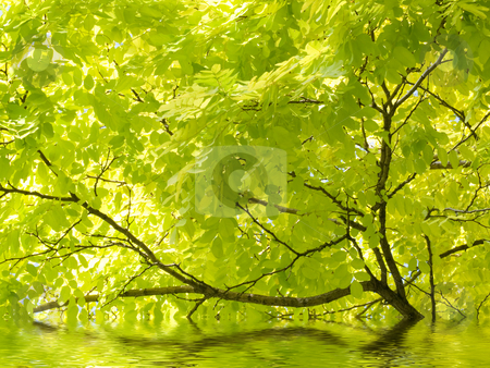 Beautiful tree and water stock photo, Beautiful tree with reflection in river by Laurent Dambies