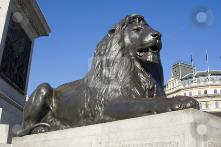 Guard Lion from National Gallerie's Square stock photo, Lion from Nelson's Column in Trafalgar Square before the National Gallery. by Lee Torrens