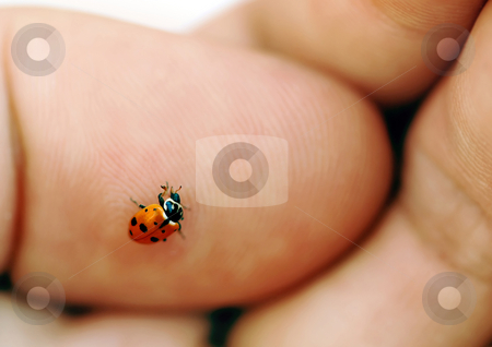 Ladybird on hand stock photo, Small red ladybird over human hand close up macro by Julija Sapic
