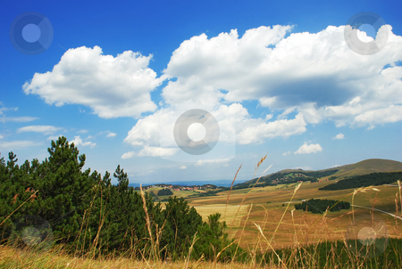 Rural landscape stock photo, Yellow meadows, green trees and blue sky with clouds by Julija Sapic