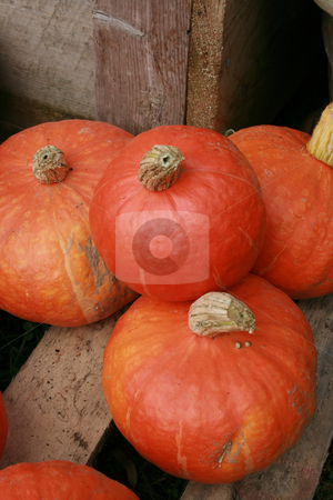 Squash for Sale stock photo, Colorful squash for sale at an Autumn farmers market by Tom and Beth Pulsipher