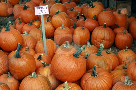 Pumpkins for Sale stock photo, A pile of pumpkins for sale at the Fall farmers market by Tom and Beth Pulsipher