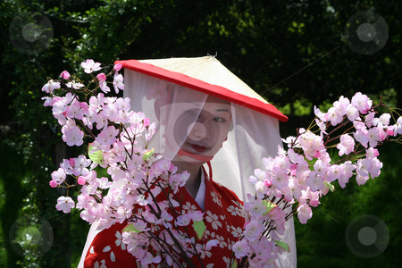 Japanese Geisha stock photo, A Japanese Geisha during the Japanese Cherry Blossom show by Ryan Bouie