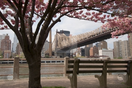 View of Manhattan and Queensboro Bridge stock photo, A park bench with a qreat view Manhattan along with the Queensboro Bridge by Ryan Bouie