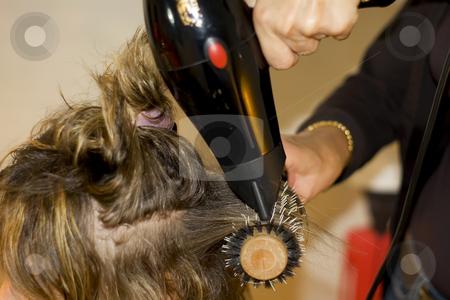 Hairdresser stock photo, Hairdresser cutting hair by Serge VILLA