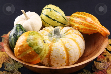 Fall Dish stock photo,  by George Botta