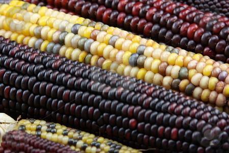 Unique Corn stock photo,  by George Botta