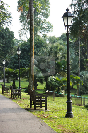 Tropical park stock photo, Walkway in tropical rainforest park with benches by Kheng Guan Toh